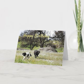 Dogs in Springtime Happy Birthday Greetings Card
