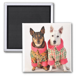 Dogs in Winter Coats 2 Inch Square Magnet