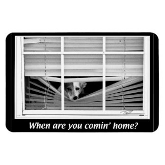 Dogs -  Jack Russels - When R U gonna B home? Rectangular Photo Magnet