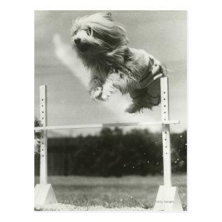 Dogs jumping over miniature high jump bar postcard