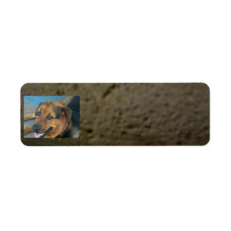 Dogs Label