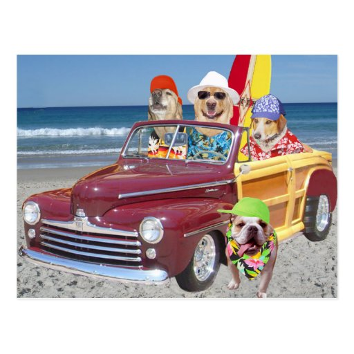 Dogs/Labs on the Beach in a Woodie Post Card