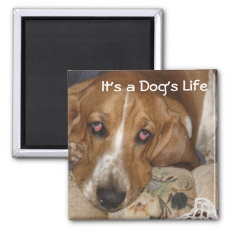 Dog's Life Magnet