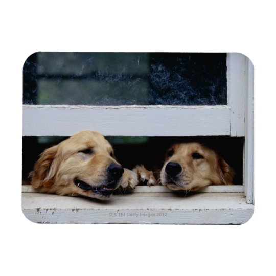 Dogs Looking Out a Window Magnet
