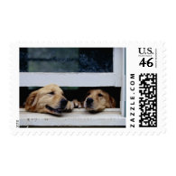 Dogs Looking Out a Window Postage Stamps