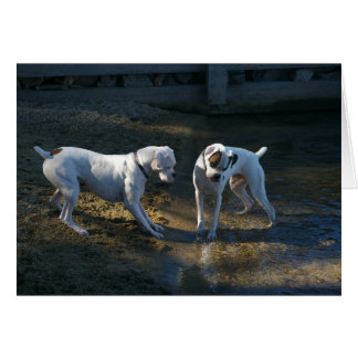 Dogs Meet Their First Wave Greeting Card
