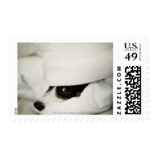Dog's Nose Sticking Out From Bedding Postage