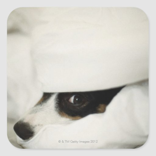 Dog's Nose Sticking Out From Bedding Stickers