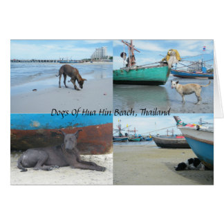 Dogs Of Hua Hin Beach, Thailand Card