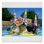 Dogs on float with party hats-z print