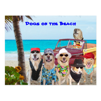 Dogs on the Beach Postcard