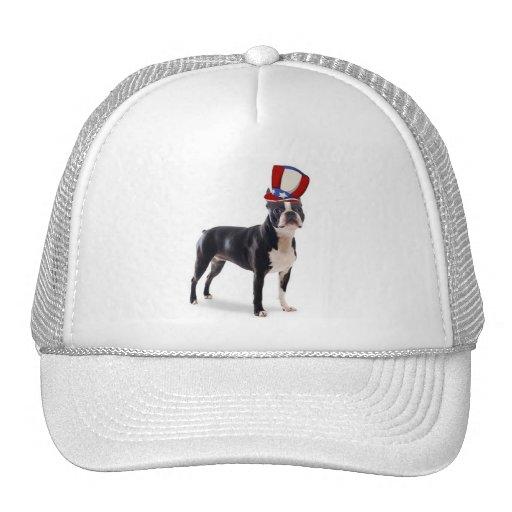 Dogs~Original Ditzy Hat~Boston Terrier Gorra