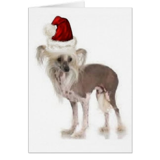 Dogs~Original Ditzy Notecard~Chinese Crested Tarjeta De Felicitación