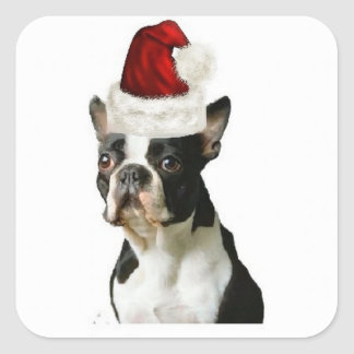 Dogs~Original Ditzy Sticker~Boston Terrier Colcomanias Cuadradass