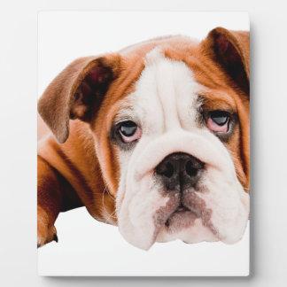 DOGS, PETS BULLDOG CUTE ADORABLE DIGITAL REALISM P PLAQUE