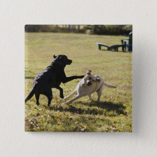 Dogs playing button
