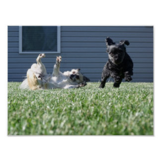 Dogs Playing Framed Print