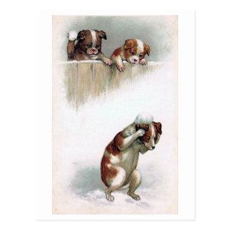 """Dogs playing Snowballs"" Vintage Postcard"