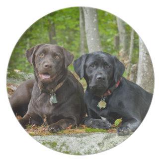 Dogs Puppies Black Lab Chocolate Labrador Retrieve Melamine Plate