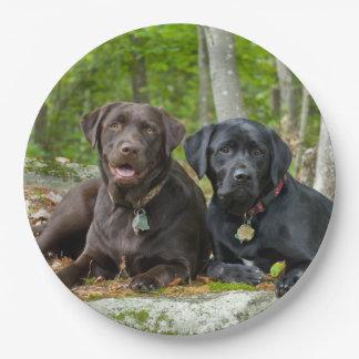 Dogs Puppies Black Lab Chocolate Labrador Retrieve Paper Plate