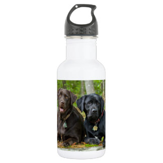 Dogs Puppies Black Lab Chocolate Labrador Retrieve Stainless Steel Water Bottle