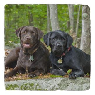 Dogs Puppies Black Lab Chocolate Labrador Retrieve Trivet