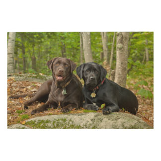 Dogs Puppies Black Lab Chocolate Labrador Retrieve Wood Wall Art