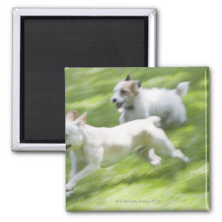 Dogs running in lawn 2 inch square magnet
