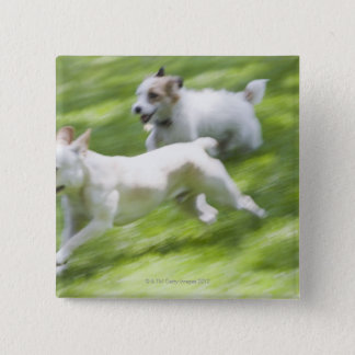 Dogs running in lawn button