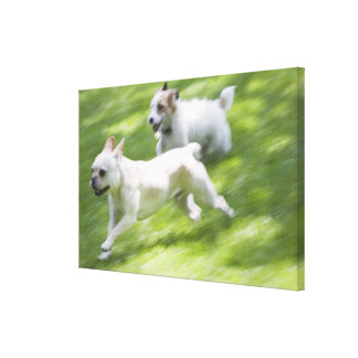 Dogs running in lawn canvas print
