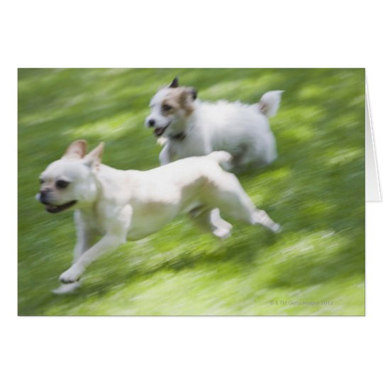 Dogs running in lawn card