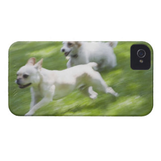 Dogs running in lawn iPhone 4 case