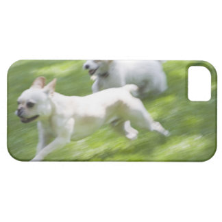 Dogs running in lawn iPhone SE/5/5s case