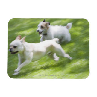 Dogs running in lawn rectangular photo magnet