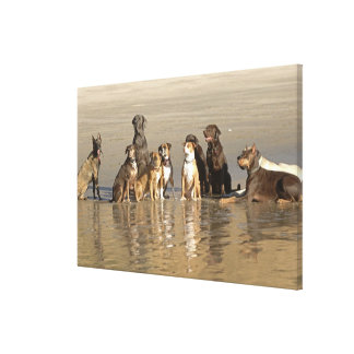 Dogs sitting on beach canvas print