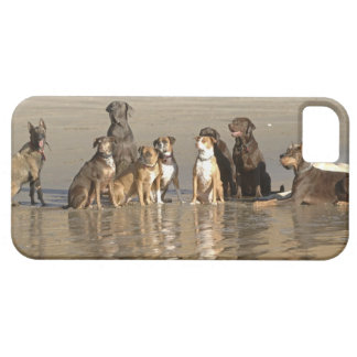Dogs sitting on beach iPhone 5 covers