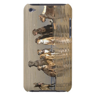 Dogs sitting on beach iPod touch cover
