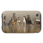 Dogs sitting on beach tough iPhone 3 covers