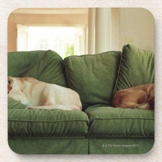 Dogs sleeping on sofa drink coaster