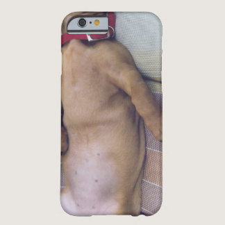 Dog's Stomach Barely There iPhone 6 Case