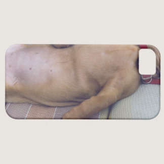 Dog's Stomach iPhone SE/5/5s Case