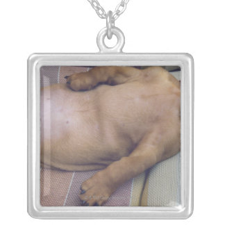 Dog's Stomach Square Pendant Necklace