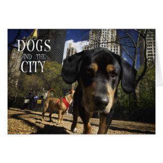 DOGS & THE CITY - FUNNY POSTCARDS CARDS