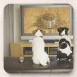 Dogs watching dog dish with food on TV Drink Coaster