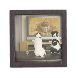 Dogs watching dog dish with food on TV Gift Box