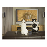 Dogs watching dog dish with food on TV Postcard