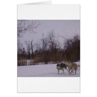 Dogsledding fun greeting cards