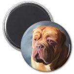 Dogue de Bordeaux Art - Stormy Dogue Magnet