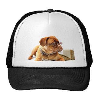 dogue de bordeaux dog wearing glasses trucker hat