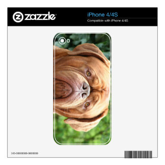 Dogue de Bordeaux (French Mastiff) Skins For The iPhone 4S